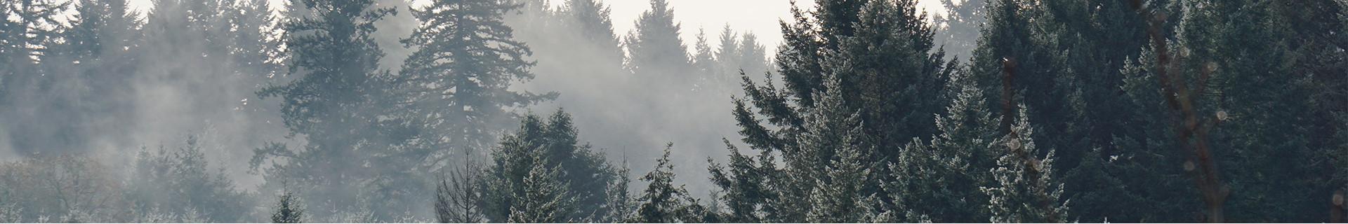 Métiers forestiers & travaux pratiques - Paraboot Pro